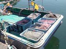 マリン用品レンタル 漁具(網・錨・ブイ)